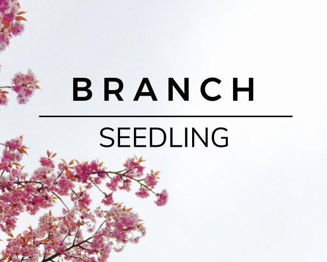 Branch: Seedling