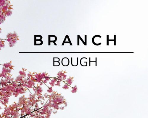 Branch: Bough