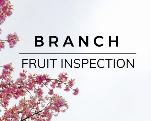 Branch: Fruit Inspection